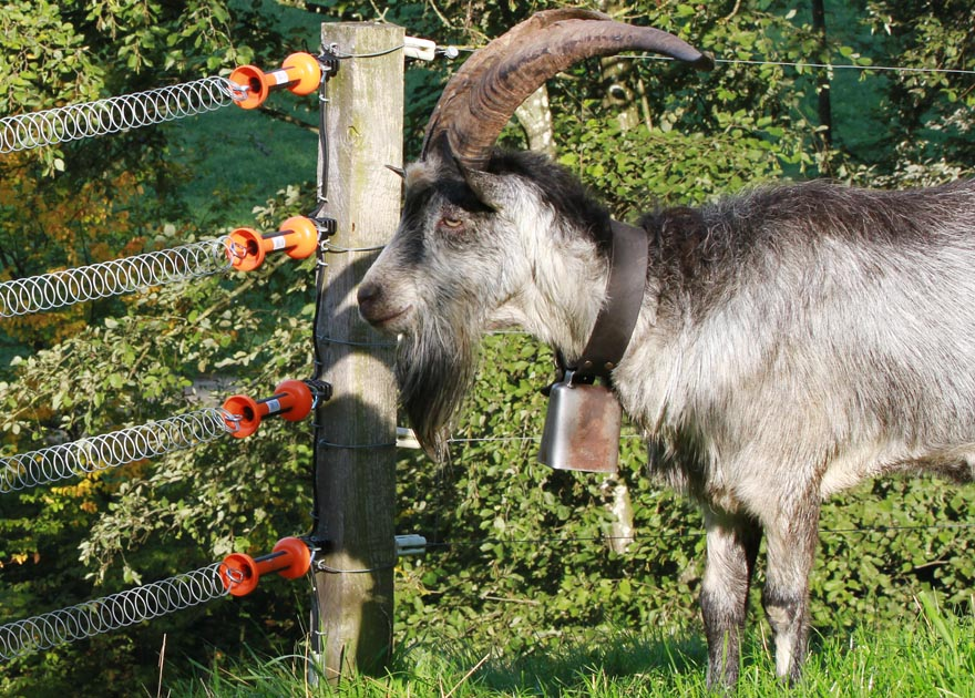 High Tensile Fence For Goats Gallagher