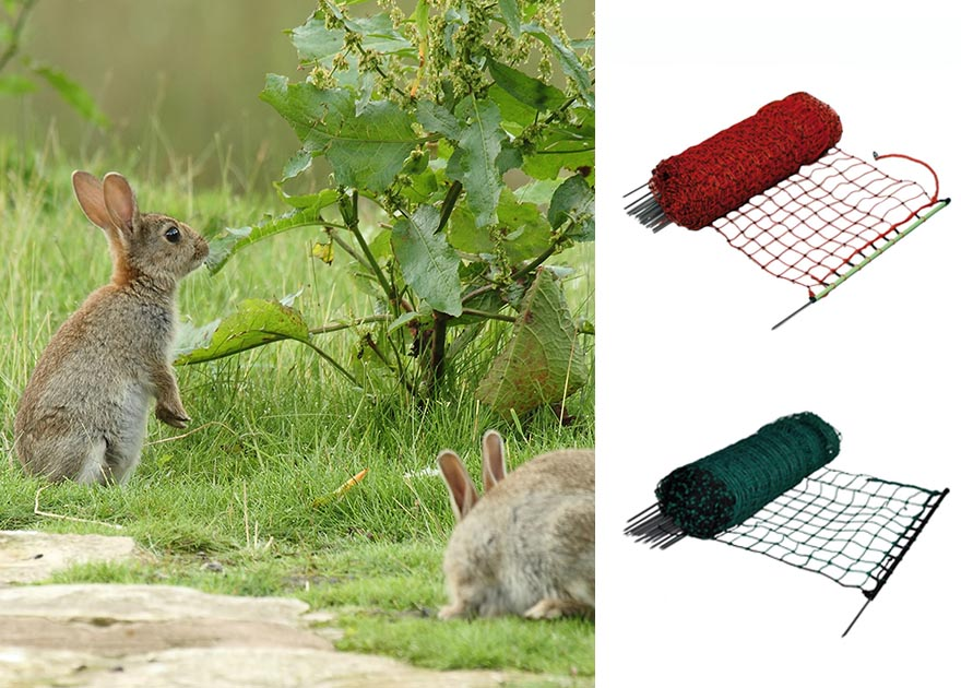 discover fencing - How To Keep Rabbits Out Of Garden